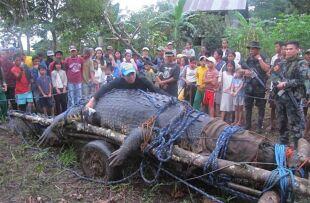 Krokodyl gigant turystyczną atrakcją